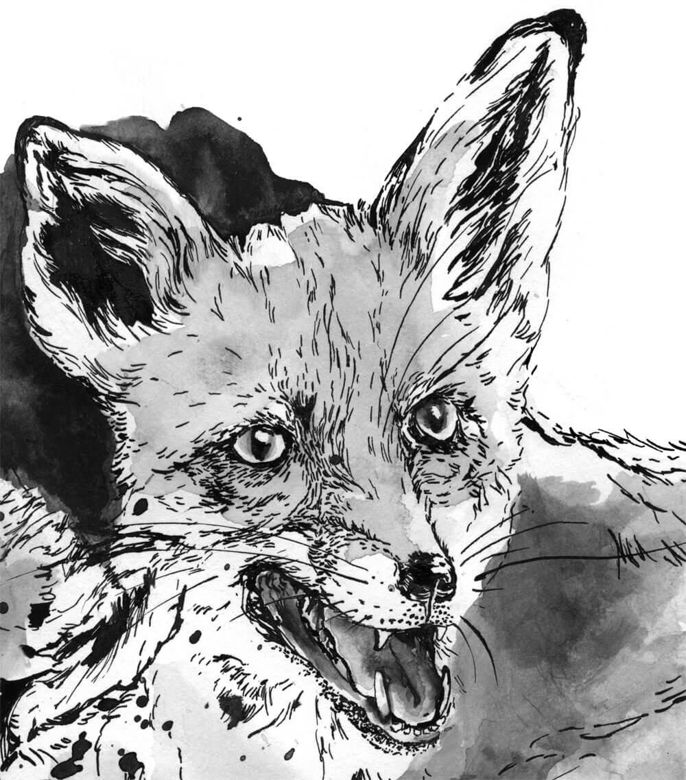 sylvia_stolan_foxes04
