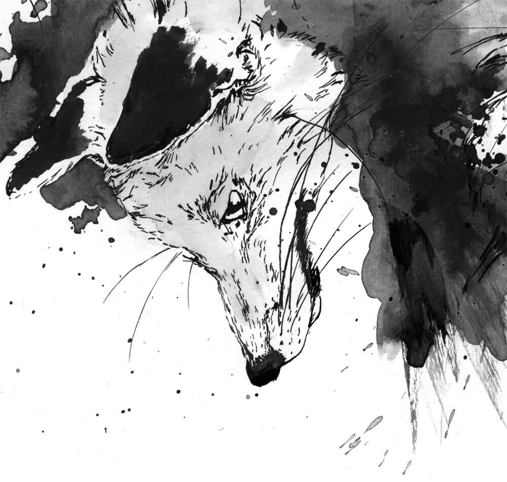 sylvia_stolan_foxes05
