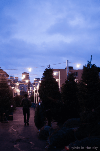 Sylvie in the Sky - Home - Christmas - Holoiday Ornament Inspiration-1