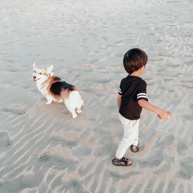 14 Amazing Activities for Dads and Kids by top US lifestyle blog, Sylvie in the Skye: image of young boy and black, white, and brown dog standing on a sandy beach.