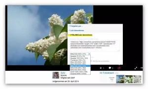 Code eines Flickr-Bildes generieren