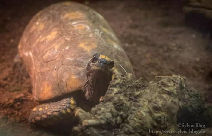 Freundiche Schildkröte