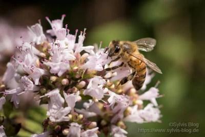 Freundliche Biene