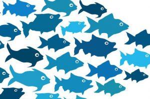 leadership-1 (fish)