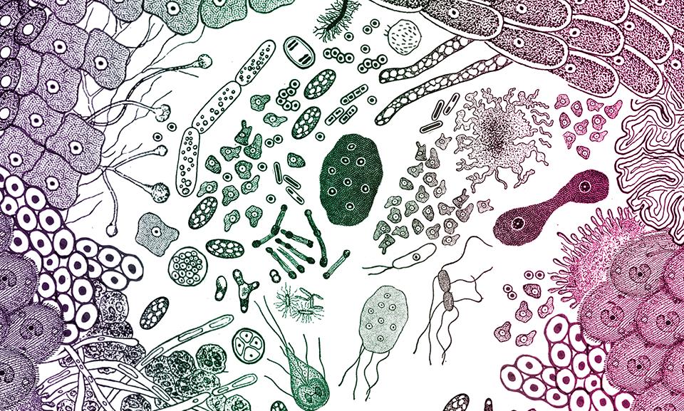 Sedem príznakov chorých čriev