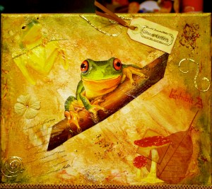 Nature Study: Litoria Chloris