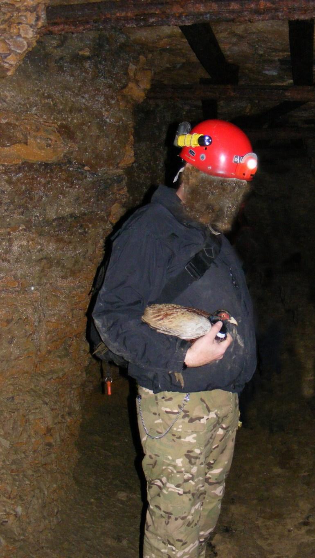 Pheasant Ditch Parrott