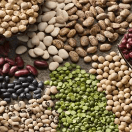 The Best Sources of Protein and Why They Matter!