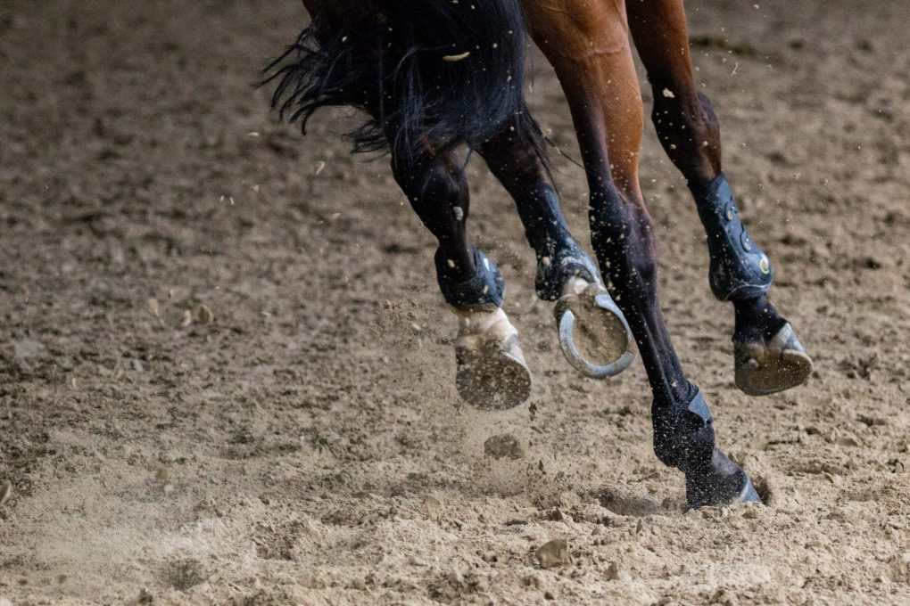 equine joints supplements and how they can support your horse