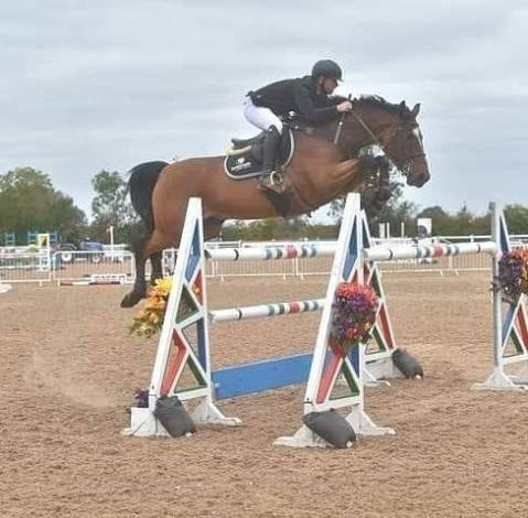David coombs showjumper ND sport horses synovium rider