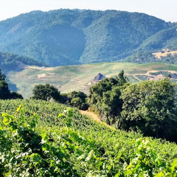 Cain Vineyards