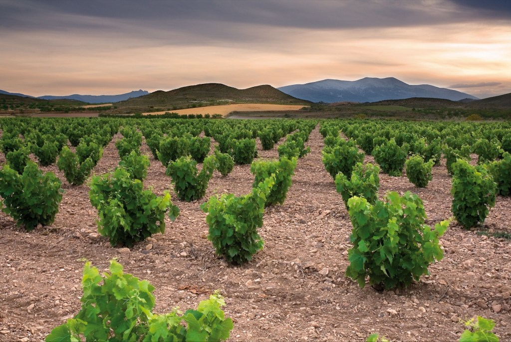 Garnacha/Grenache Quality Wines of Spain and France