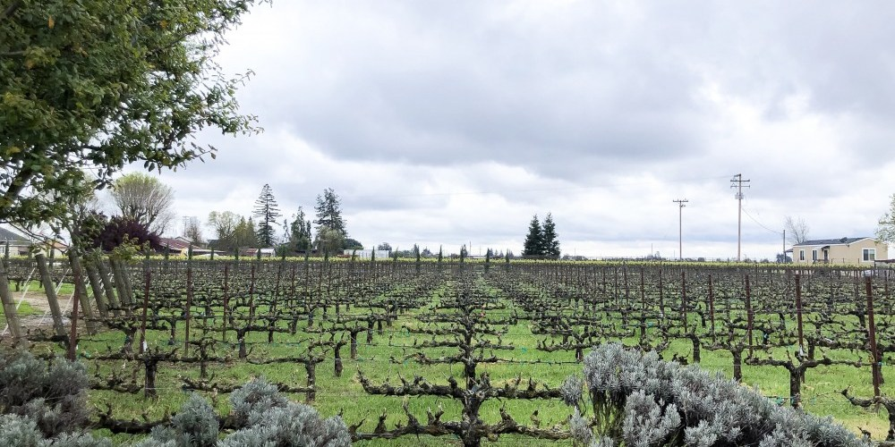 Amazing Lodi – 10 Incredible Reasons to Drink Lodi Wines