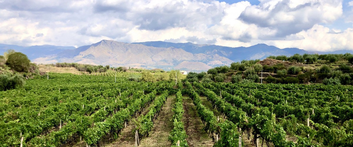 The Magic Of Mount Etna Expressed Through Donnafugata Wines