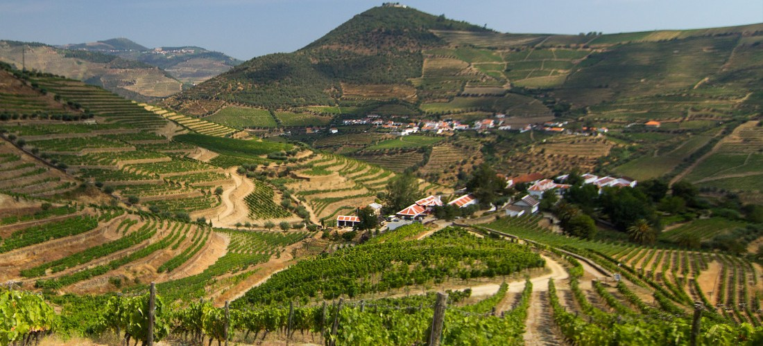 Eight Things You Should Know About Dão Wines