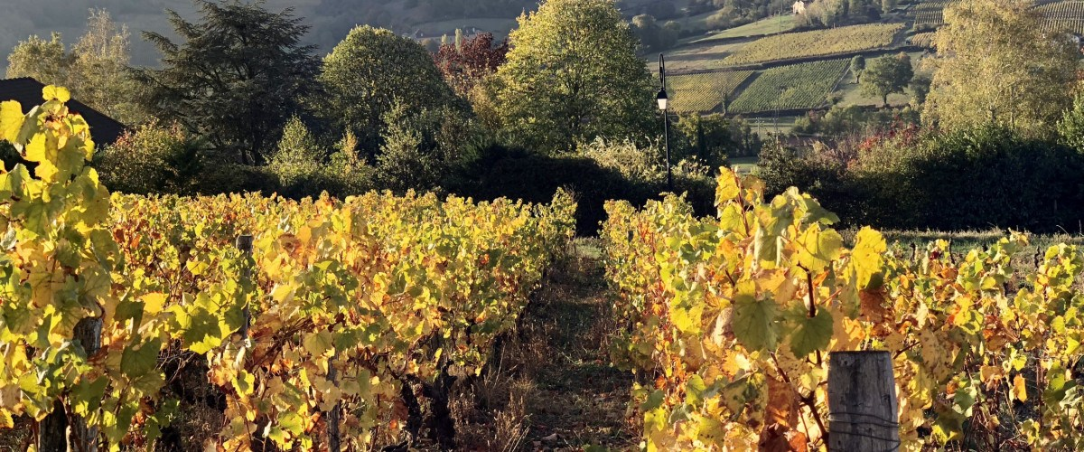 Seduced by Bourgogne Wines – Discovering The Lesser-Known Villages