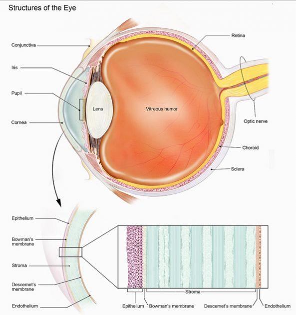 corneal-transplantation