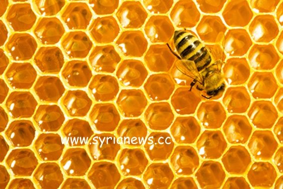Propolis is also called bee glue.