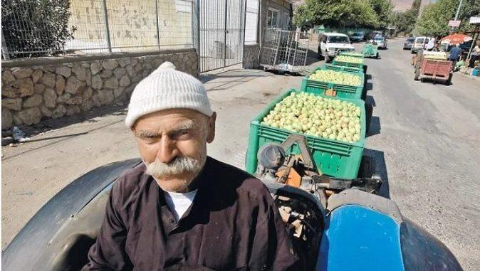 golan apples