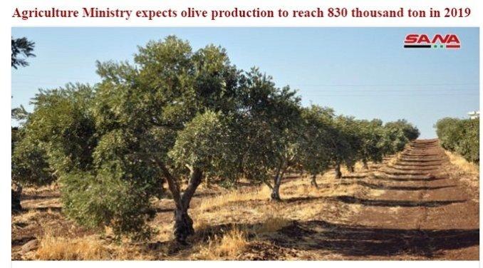 olive economy sanctions syria