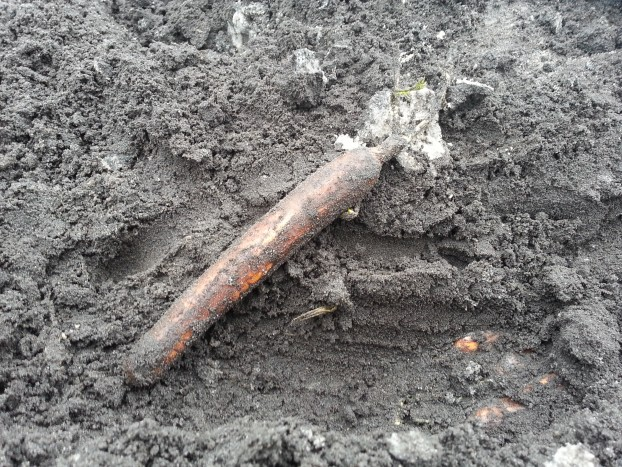 carotte en terre bledina
