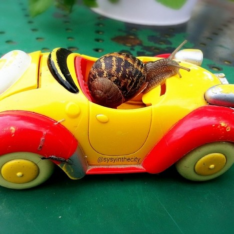 escargot voiture