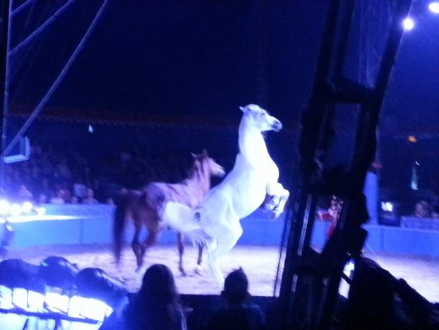 chevaux salut