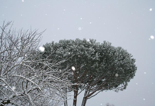 arbres neige toulouse sysyinthecity 030215