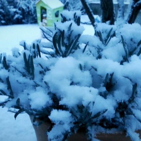 neige 03 02 15