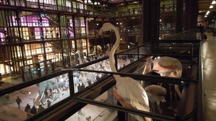 Grande galerie de l'évolution Paris SysyInTheCity (10)