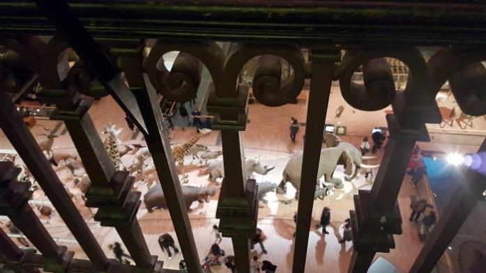 Grande galerie de l'évolution Paris SysyInTheCity (14)