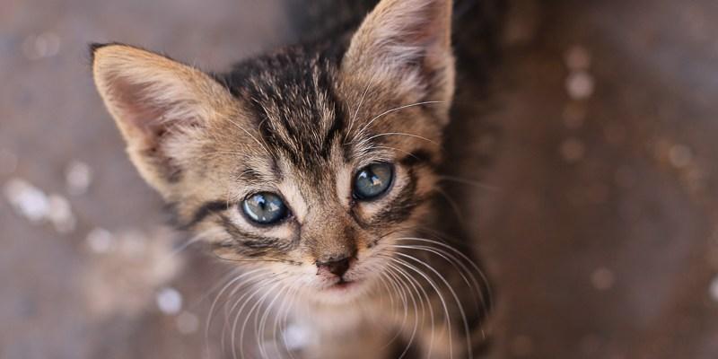 Maroko - Kot