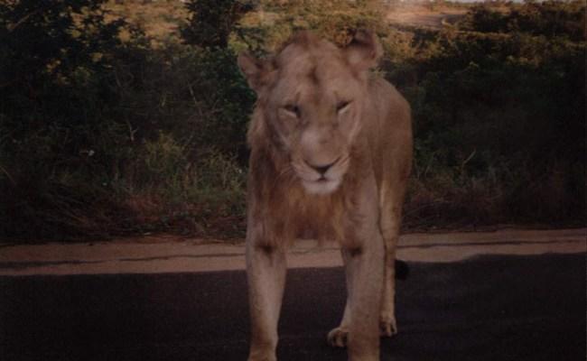 Pierwsza podróż do Afryki