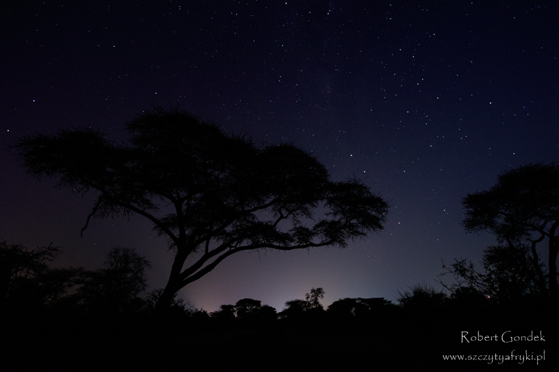 Wieczór przy najstarszym baobabie w Zimbabwe