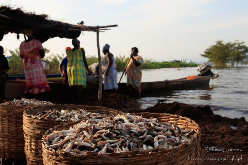 Handel rybami z jeziora Wolta o poranku