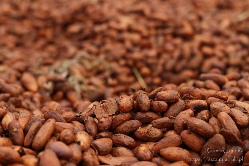 Kakao na Wyspach Świętego Tomasza i Książęcej