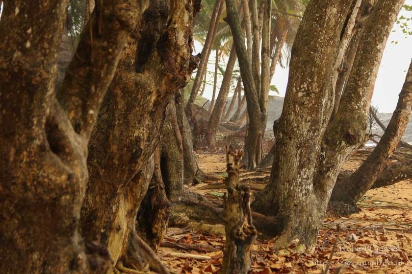 Pora deszczowa na Wyspach Świętego Tomasza i Książęcej