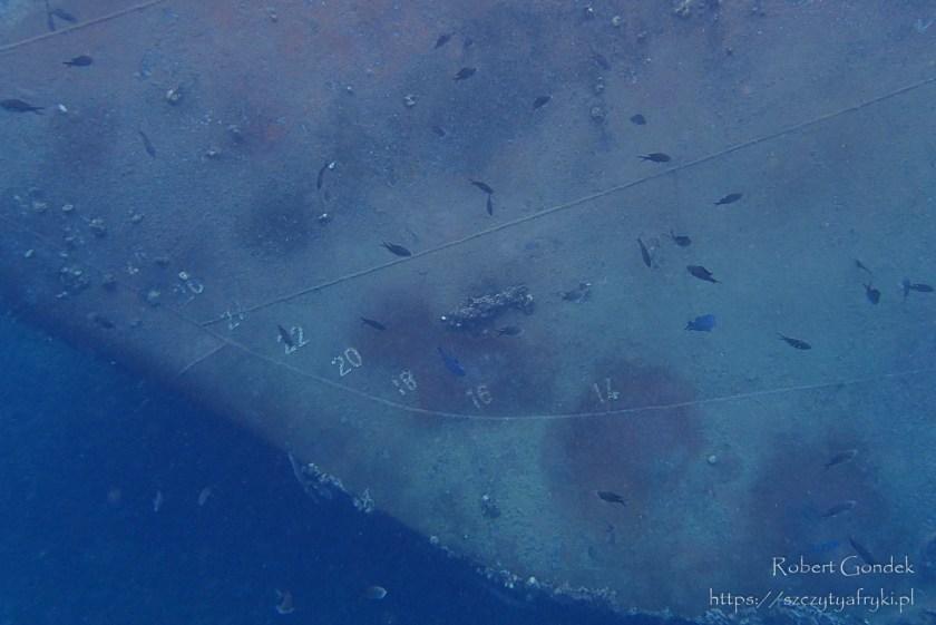 Snorkelling na Wyspach Świętego Tomasza i Książęcej