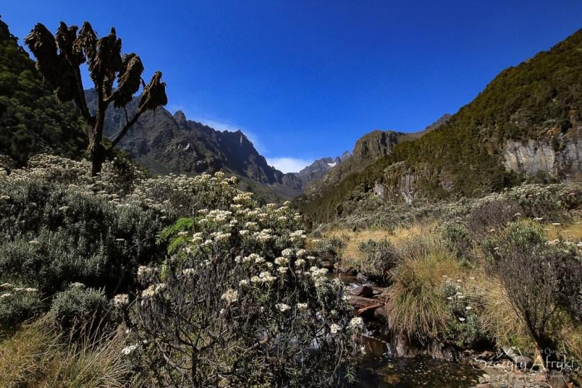 Najładniejsze góry w Afryce - ugandyjskie bagna