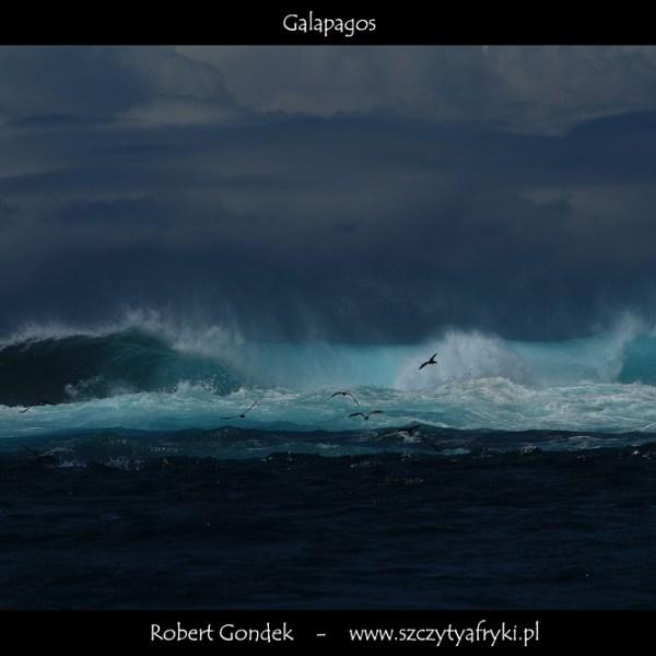 Zdjęcie z Galapagos