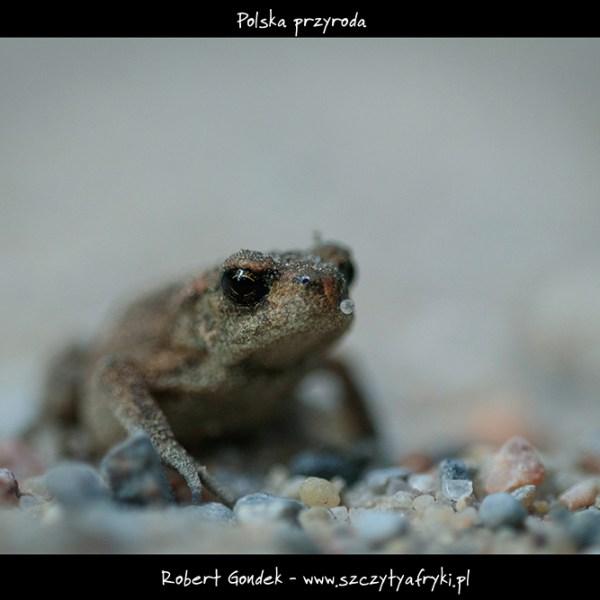 Zdjęcie żaby