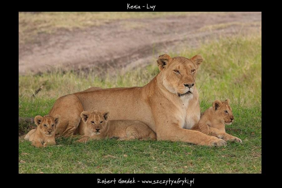 Zdjęcie lwiątek z Kenii