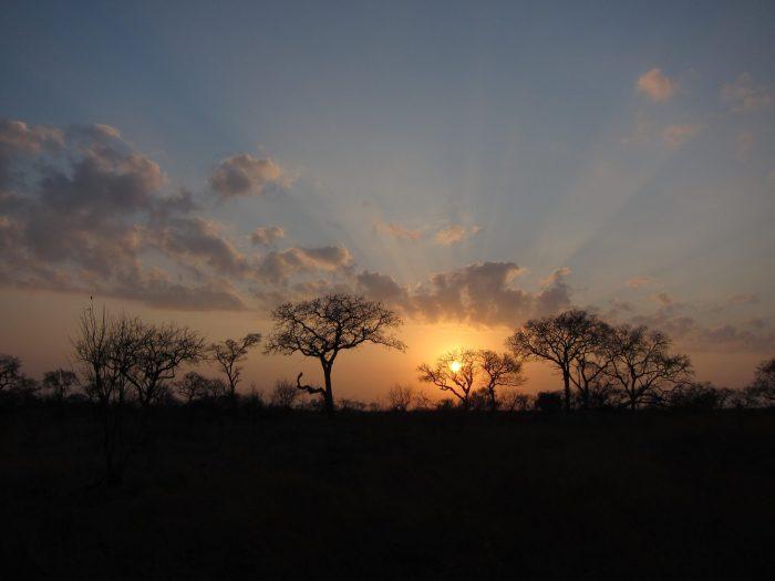 Sabi Sands South Africa