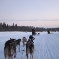 A Husky Ride to Remember