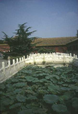 Lotus in der Verbotenen Stadt