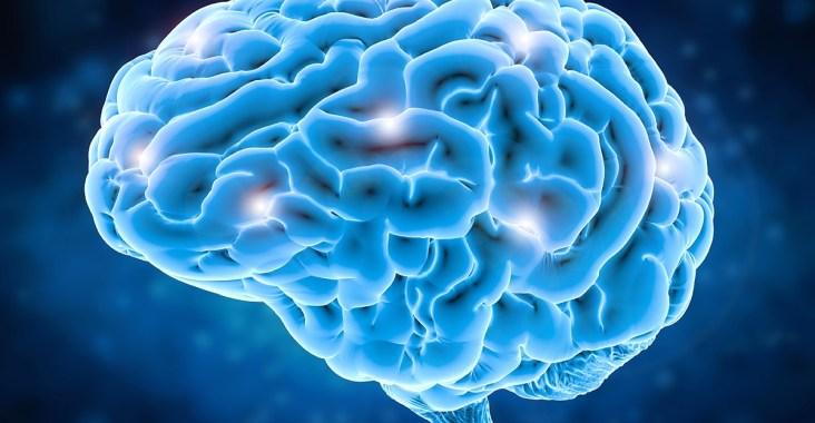 cerveau gauche ou cerveau droit : quelle différence ?