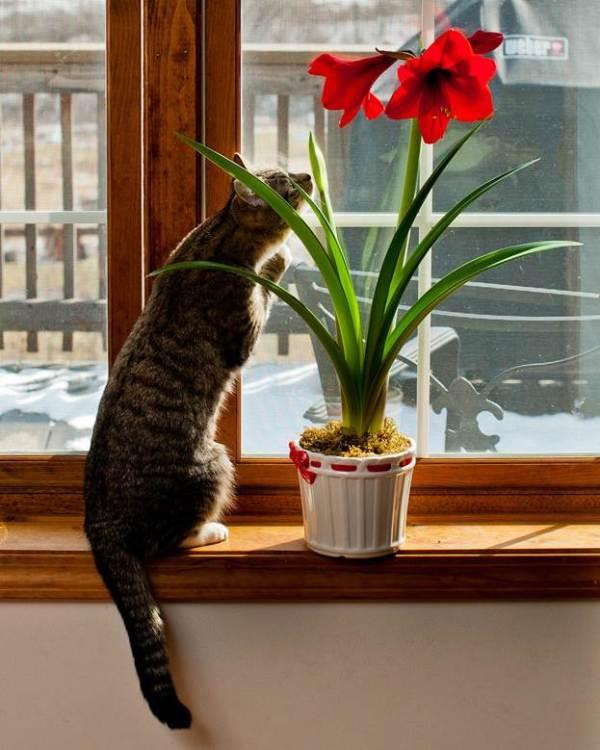 Ядовитые комнатные растения фото названия отравления