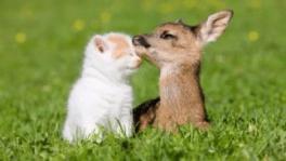 寵物溝通教學、動物溝通、寵物溝通自學