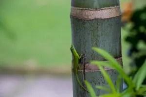 meilleur canisse bambou 2021 avis