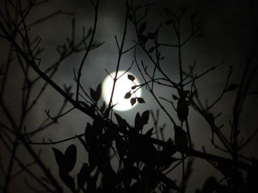 full moon san pedro belize